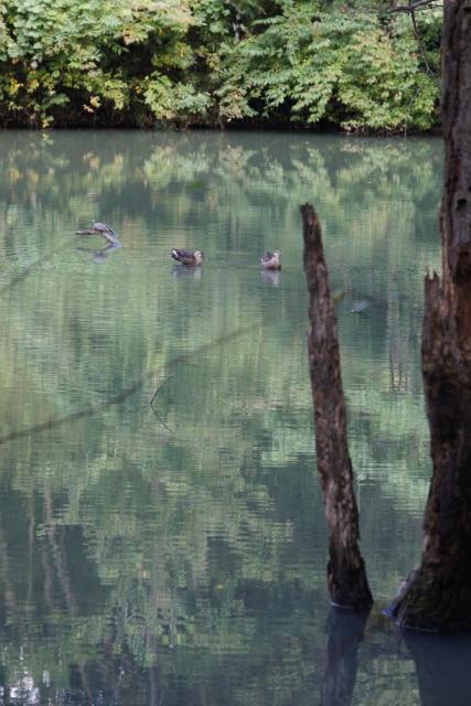 湖面001