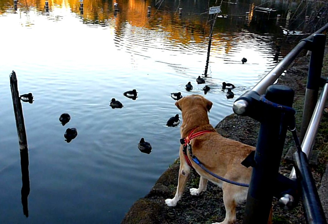 Duck1230_1.jpg
