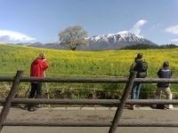 20110515ipponsakura02