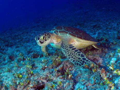 turtle022011-01.jpg