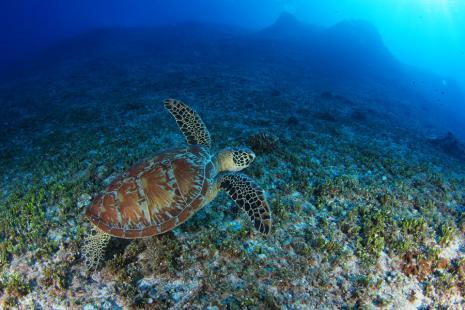 turtle121012-03.jpg