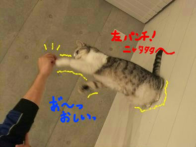 (6)_20101126010041.jpg