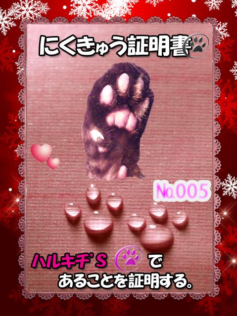 肉球110225(ハルキチちゃん)