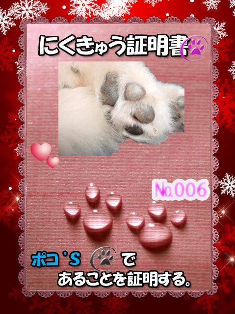 肉球110225(ポコくん)