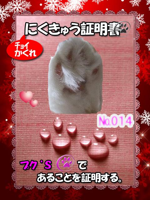 肉球110226(ぷくちゃん)