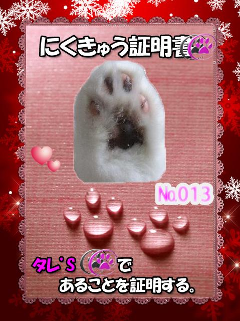 肉球のみ110226(タレちゃん)