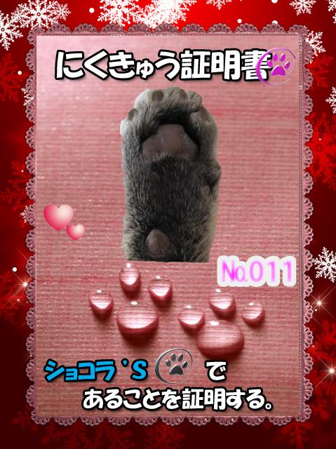 肉球110226(ショコラ君)
