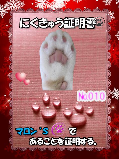 肉球110226(マロン君)
