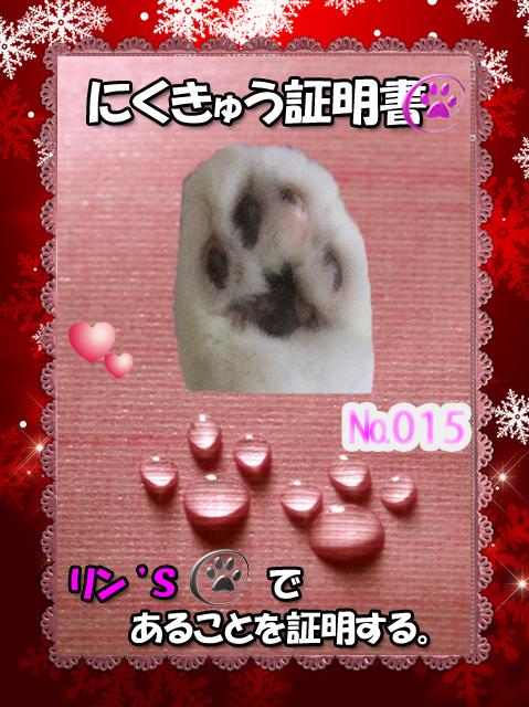 肉球110226(りんちゃん)