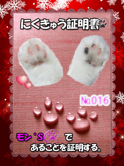 肉球110226(モンちゃん)