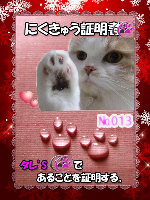 肉球110226(タレちゃん)