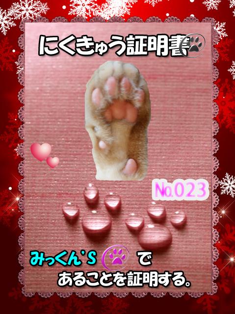 肉球110227(みっくん)_edited