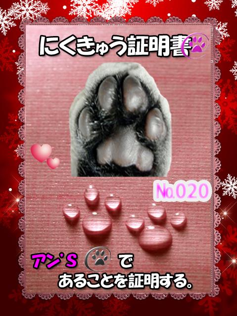 肉球110227(あんちゃn)
