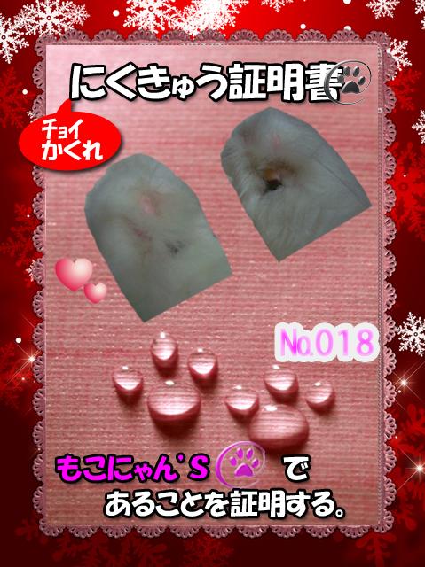 肉球110227(もこにゃん)_edit