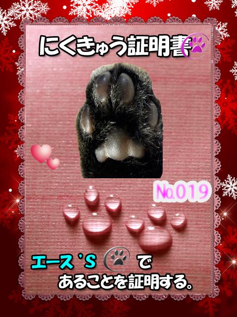 肉球110227(エースくん)
