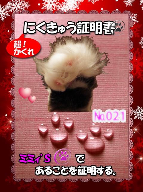 肉球110228(ミミィちゃん)