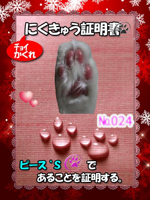 肉球110226(ピース君)