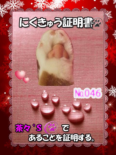 046証明証(茶々ちゃん)