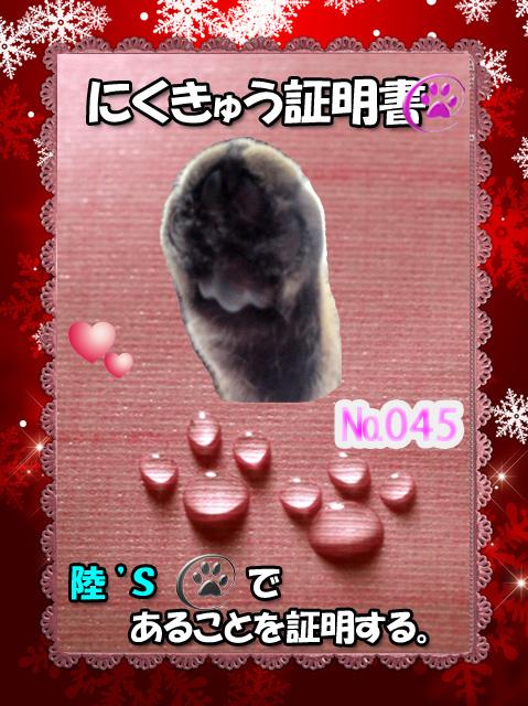 045証明証(陸くん)