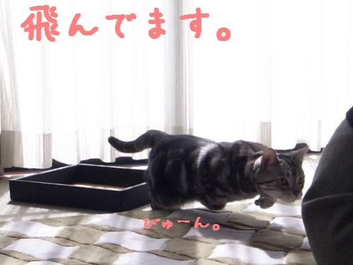 トラくん2