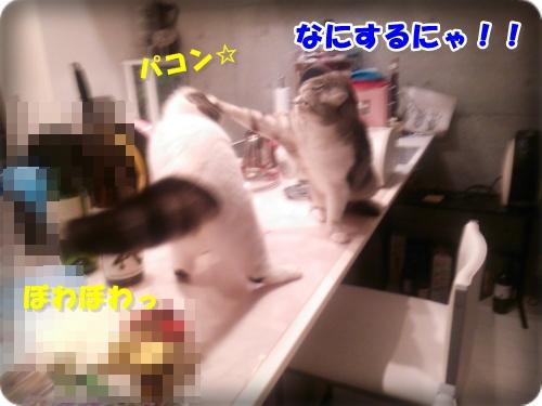 DSC_2405-003.jpg