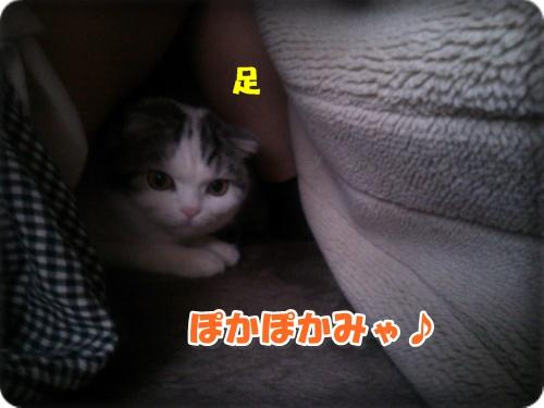DSC_2587-004.jpg