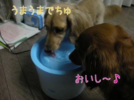 20120610-6.jpg