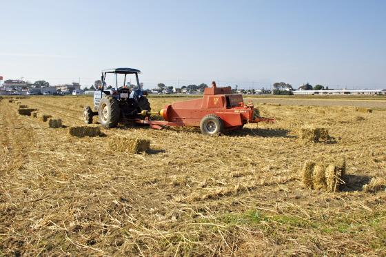 稲藁の整理