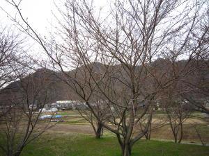 長野の桜2-2