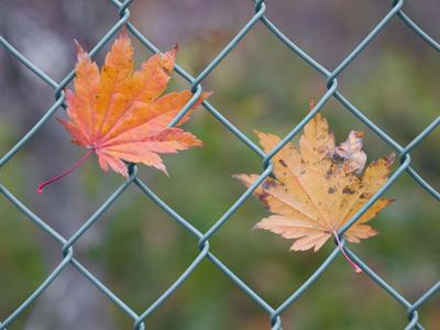 秋から冬の音-1030384