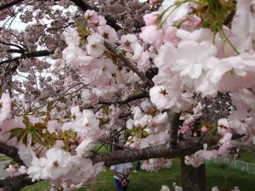 春の小布施15