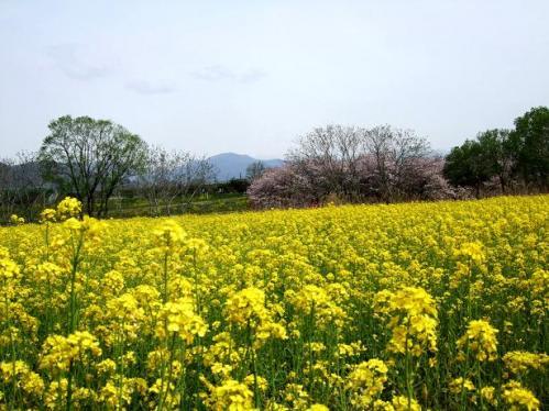 春の小布施4
