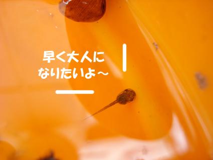 おたまじゃくし 3