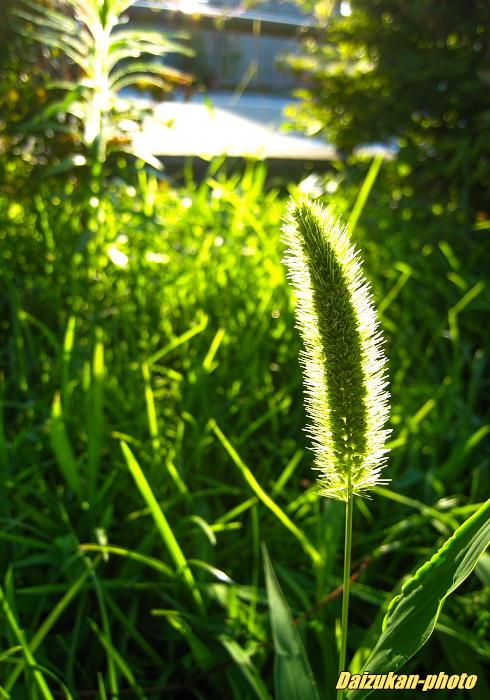 daizukan-photo-0198.jpg