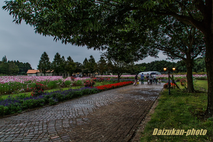 daizukan-photo-10326.jpg
