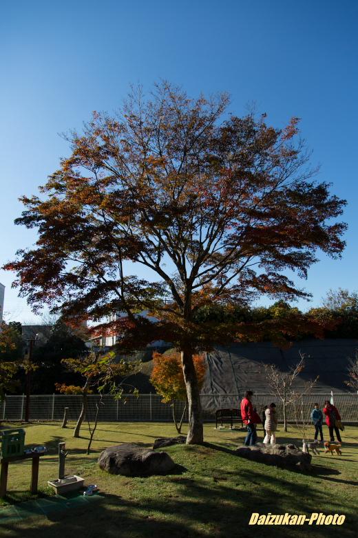 daizukan-photo-3071.jpg