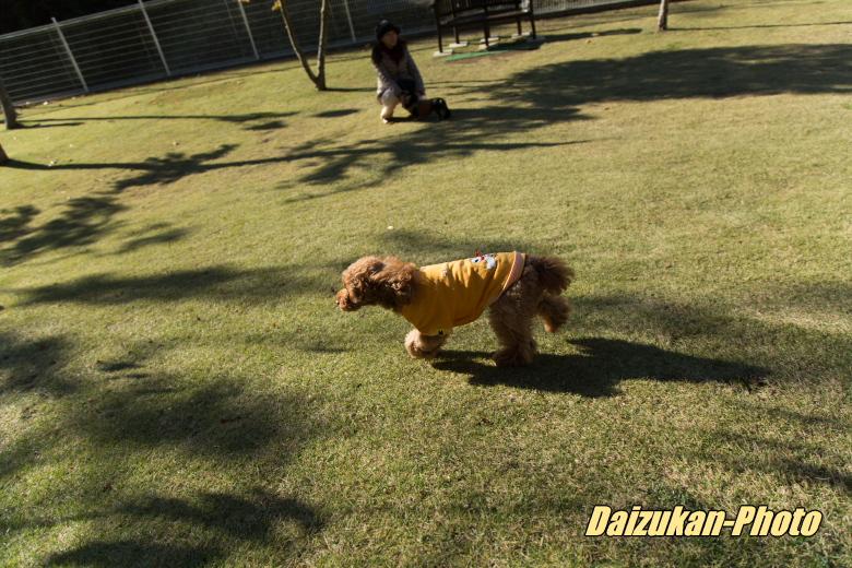 daizukan-photo-3074.jpg