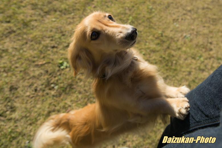 daizukan-photo-3132.jpg