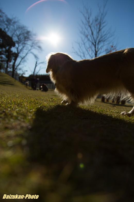 daizukan-photo-3135.jpg