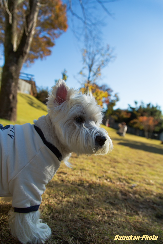 daizukan-photo-3172.jpg