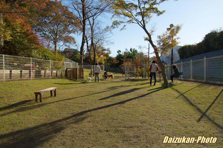 daizukan-photo-3198.jpg