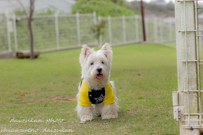 daizukan-photo-8209.jpg