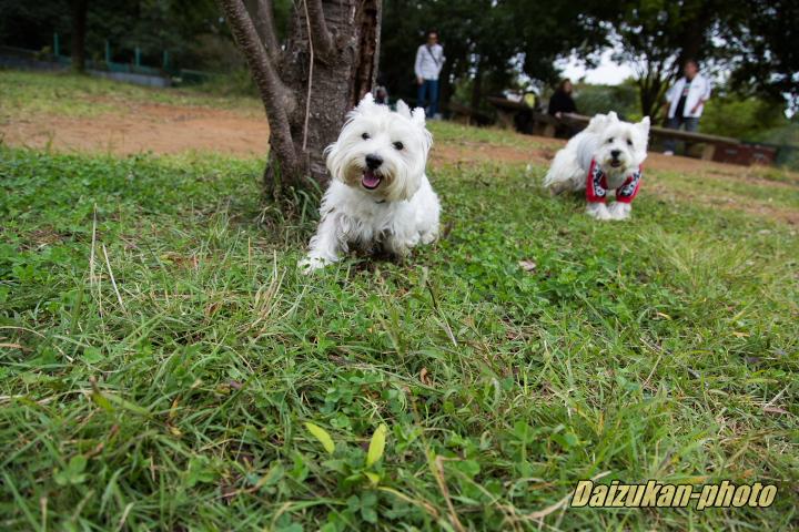 daizukan-photo-9853.jpg