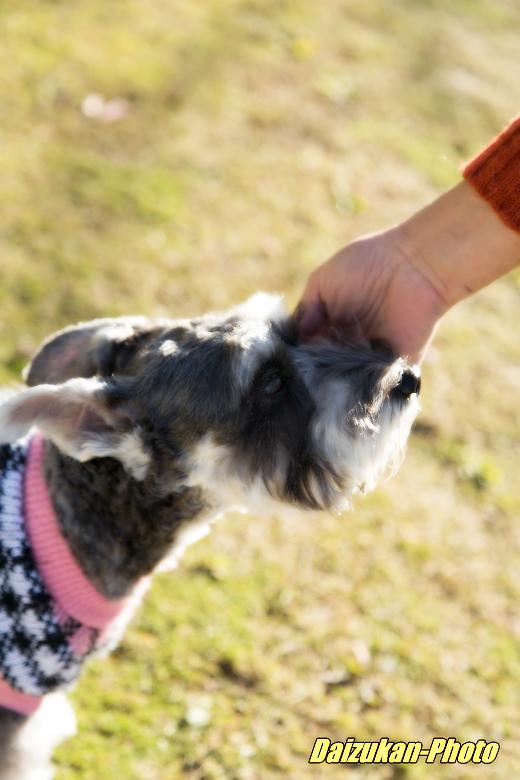 daizukan-photo-_20121123173142.jpg