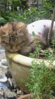 ミニー、去勢手術後、植木鉢の中でお昼寝zzz