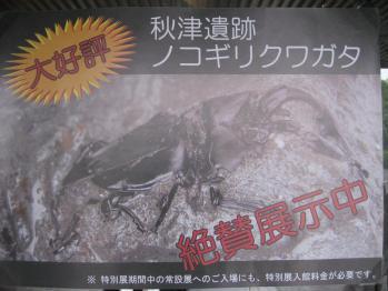 ブログ リラ ノコ化石005