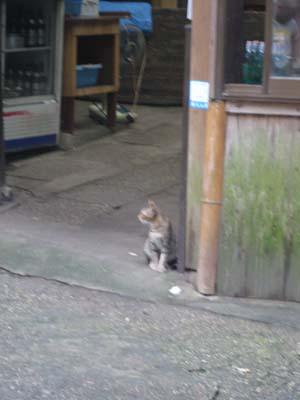 レースを観戦する猫