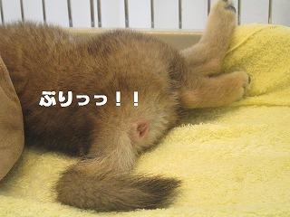 2012_0919_150222-IMG_3601 - コピー