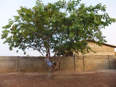 グァバの木にて