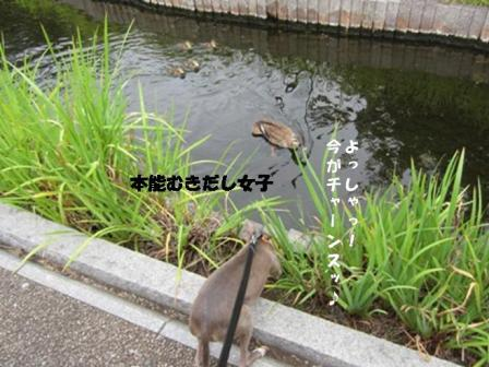 0727せせらぎ_06